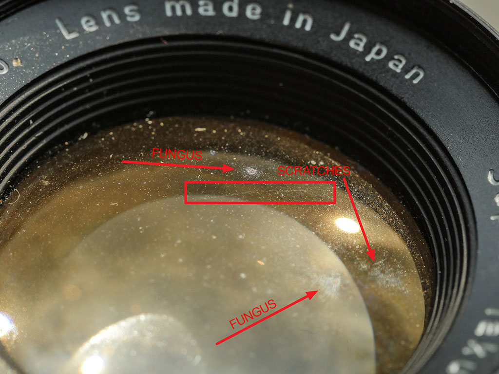 Fungus on old lens